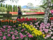 Wish this was my garden...