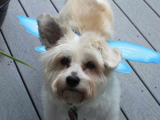 Haven't you ever seen a fairy dog before???
