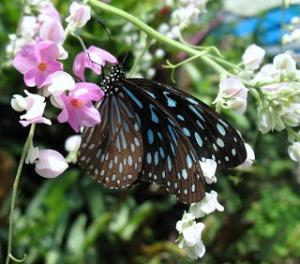 butterfly-garden-4