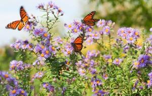 Butterfly-Header