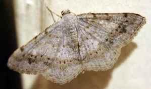 MothsO18